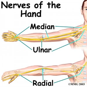 wrist_anatomy_nerves01